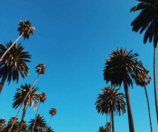 palm trees with sky background