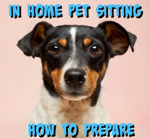 in house pet sitting