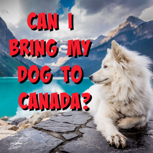 can i bring my dog to canada?