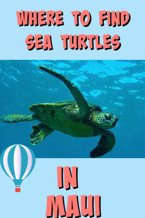 see turtles in maui