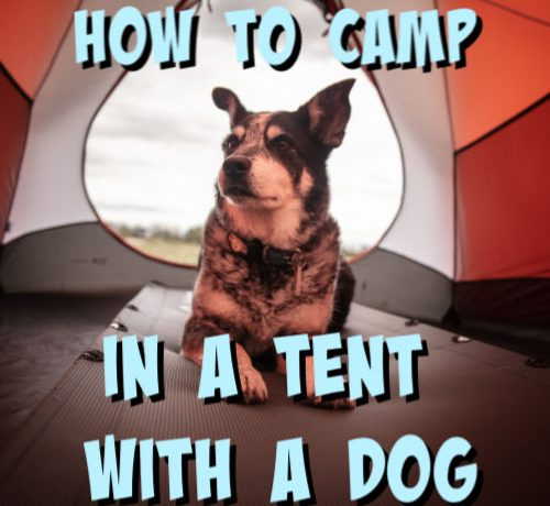 tent camping with a dog
