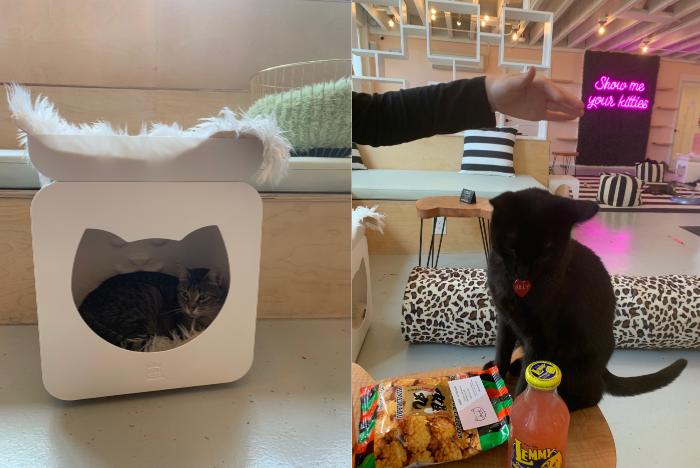 cats playing at NEKO