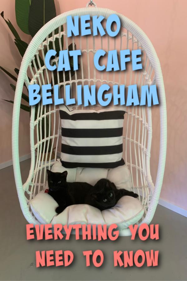 neko cafe bellingham